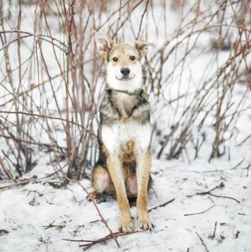 Левис - Собаки в добрые руки