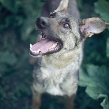 Генри - Собаки в добрые руки