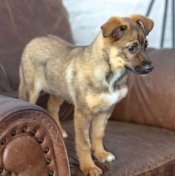 Шурочка Голицынская - Собаки в добрые руки