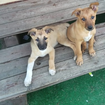 Тагира - Собаки в добрые руки
