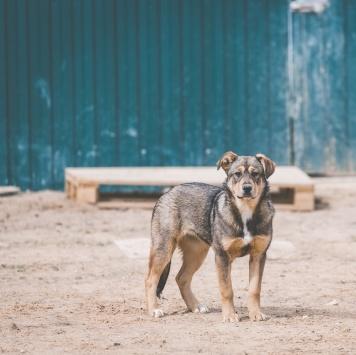 Валюшка - Собаки в добрые руки