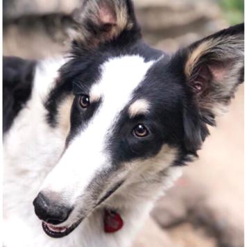 Бьюша - Собаки в добрые руки