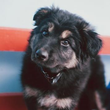 Йолли - Собаки в добрые руки