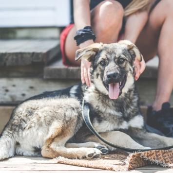 Джуди и Шери - Собаки в добрые руки