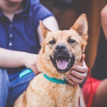 Бима - Собаки в добрые руки