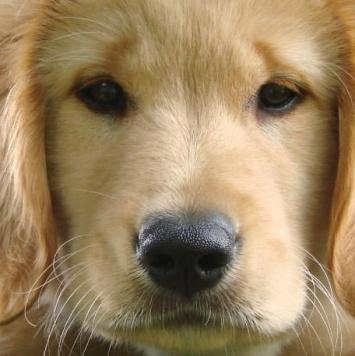 Вики - Собаки в добрые руки