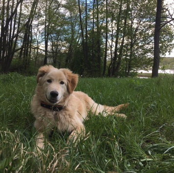 Лексус - Пропавшие собаки