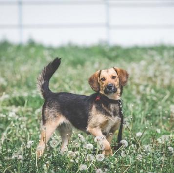 Бэлла - Собаки в добрые руки