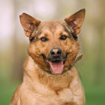 Казино - Собаки в добрые руки