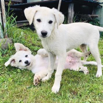 Мальчик и Девочка - Собаки в добрые руки