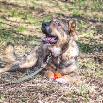 Семён - Собаки в добрые руки