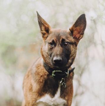 Бель - Собаки в добрые руки