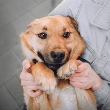 Арни - Собаки в добрые руки