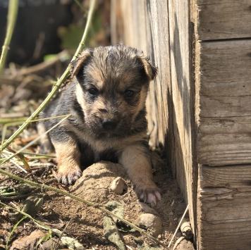 Бэки - Собаки в добрые руки