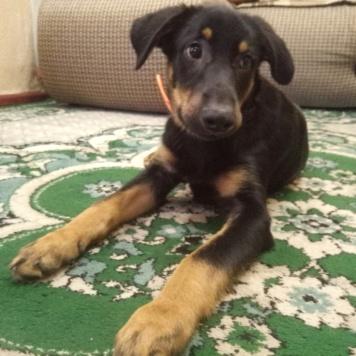 Добби - Собаки в добрые руки
