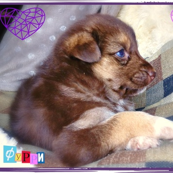 Фурри - Собаки в добрые руки