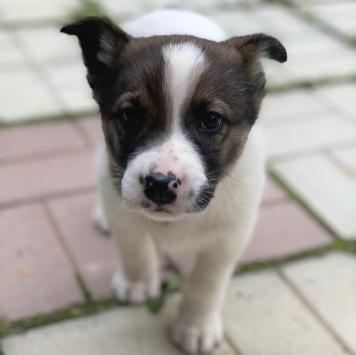 Айк - Собаки в добрые руки