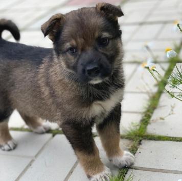 Айда - Собаки в добрые руки