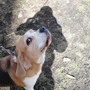 Вирджа - Собаки в добрые руки