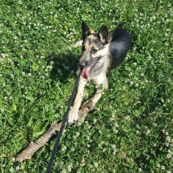 Арчибальд - Собаки в добрые руки