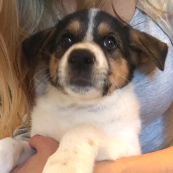 Леди Бриеша - Собаки в добрые руки