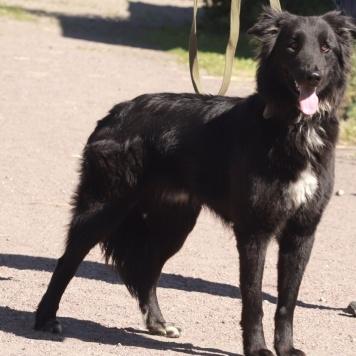 Максимилиан - Собаки в добрые руки