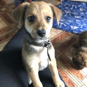 Африка - Собаки в добрые руки