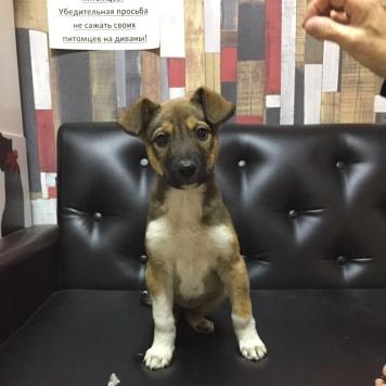 Лорд и Лилу - Собаки в добрые руки
