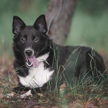Дельта - Собаки в добрые руки