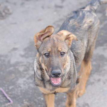 Лаврик - Собаки в добрые руки