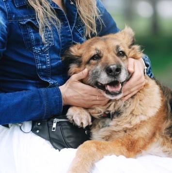 Джозеф - Собаки в добрые руки