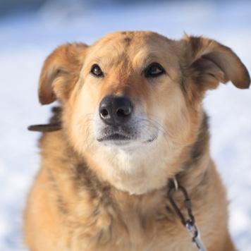 Сашулька - Собаки в добрые руки
