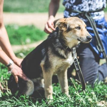Джуми - Собаки в добрые руки