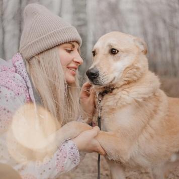 Балагур - Собаки в добрые руки