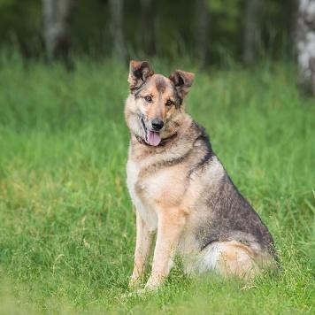 Денвер - Собаки в добрые руки