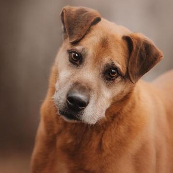 Бисмарк - Собаки в добрые руки