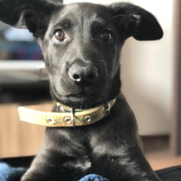Шерман - Собаки в добрые руки