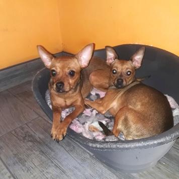 Две сестры - Собаки в добрые руки