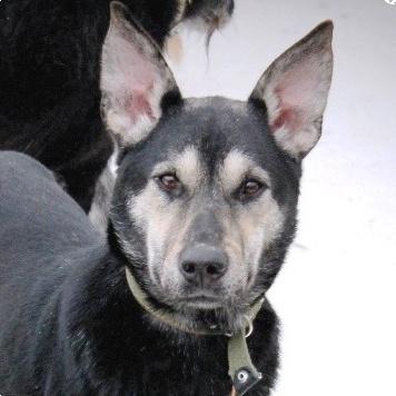 Мурашик - Собаки в добрые руки