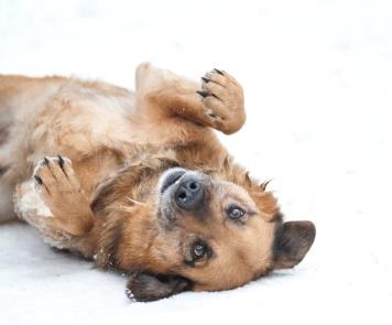 Эрик - Собаки в добрые руки