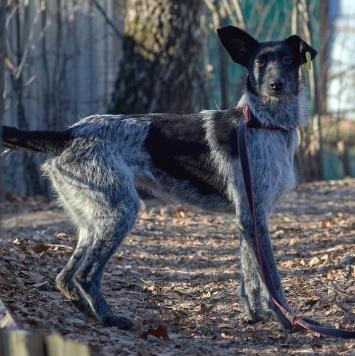 Охара - Собаки в добрые руки
