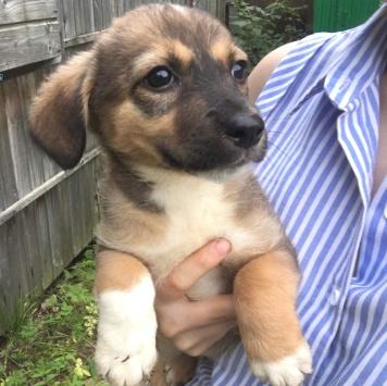 БэйЛиз - Собаки в добрые руки