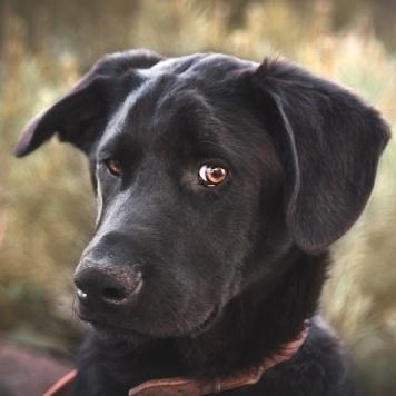 Гиннесс - Собаки в добрые руки