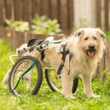 Седой - Собаки в добрые руки
