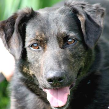 Агата - Собаки в добрые руки