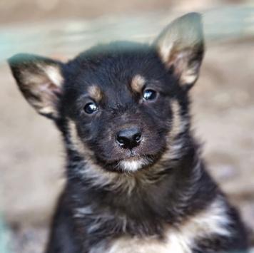 Торе Одор - Собаки в добрые руки