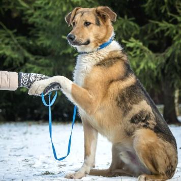 Бэн - Собаки в добрые руки