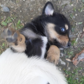 Щенки - Собаки в добрые руки
