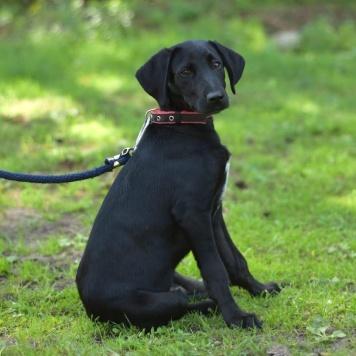 Блэк Джек - Собаки в добрые руки