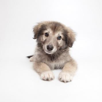 Кевин - Собаки в добрые руки